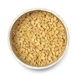 Pot barley