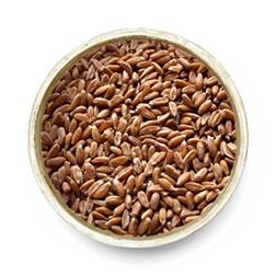 Spelt Grain